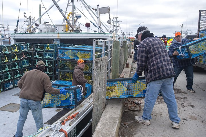 Lobster fishers who decline work due to COVID-19 are eligible for federal benefits: Ottawa