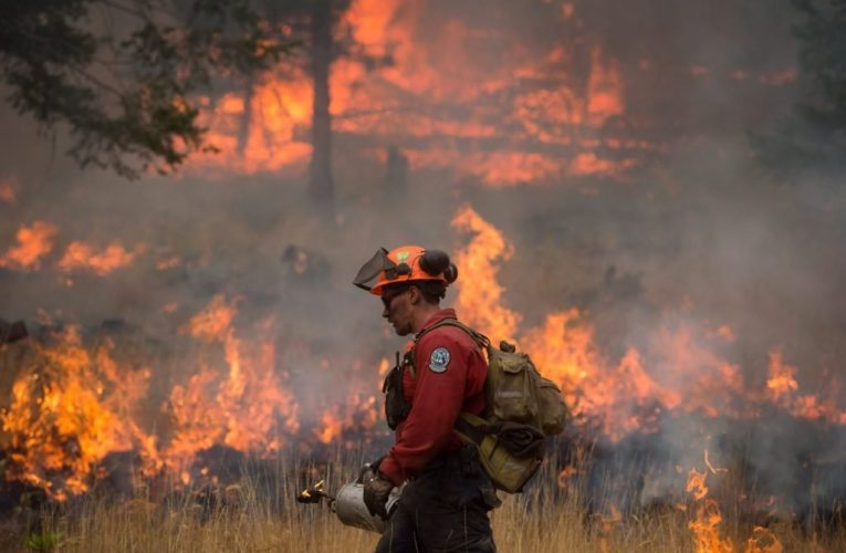 Canada's wildfire season expected to be 'well above average': Natural Resources Canada