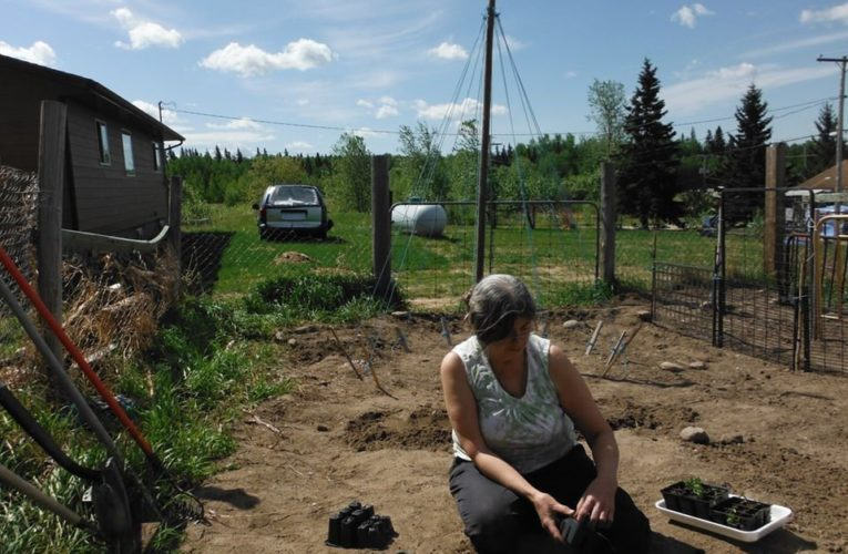 Return to the land: Gardening grows in northwest Saskatchewan during COVID-19 lockdown