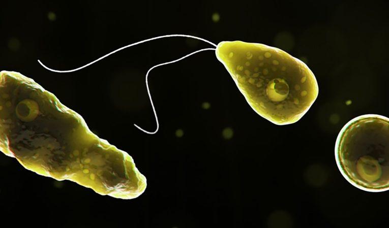 A rare case of brain-destroying amoeba has been confirmed in Florida