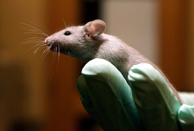 Canadian company urges human trials after COVID-19 vaccine in mice blocked virus