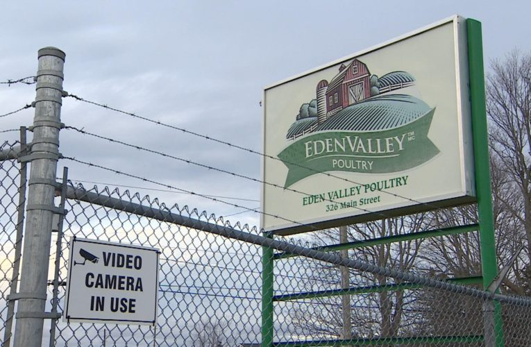 Shutdown of N.S. poultry plant could result in widespread euthanization of chickens: expert