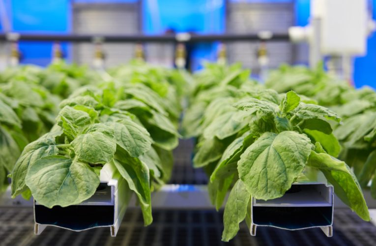 Canada's COVID-19 vaccine contender: Medicago's breakthrough, ties to Big Tobacco and warnings a pandemic was coming