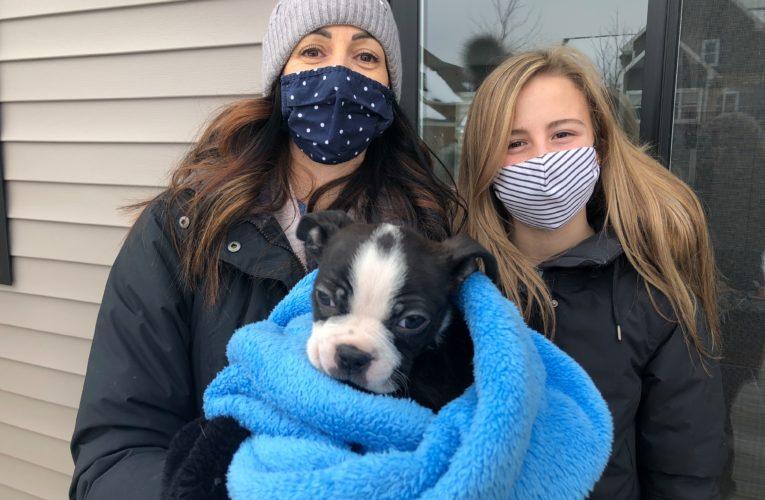 New Brunswick family's love of raising a special needs puppy raising spirits amid COVID-19