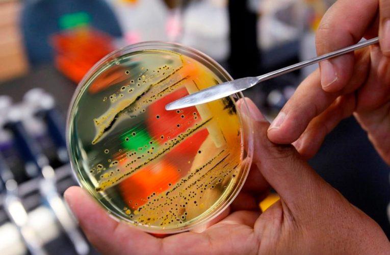 Health Canada warns of salmonella outbreak in Nova Scotia and Newfoundland