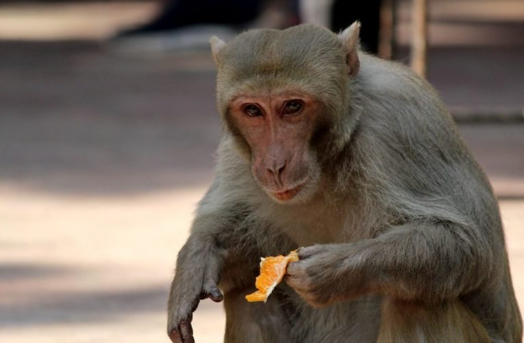 China reports its first human death from rare monkey B virus