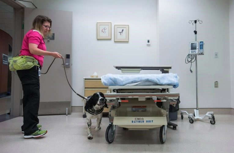 Dogs to sniff out COVID-19 in Vancouver hospitals