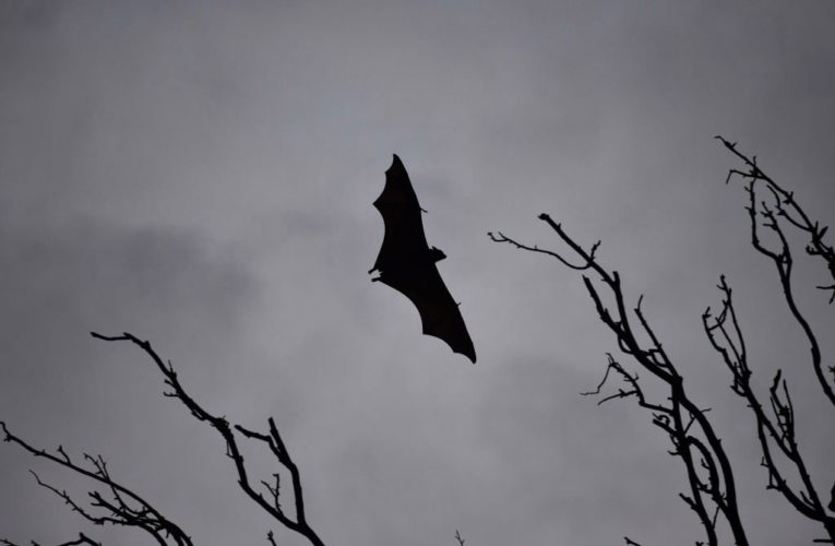 India scrambling to contain lethal Nipah virus after child's death