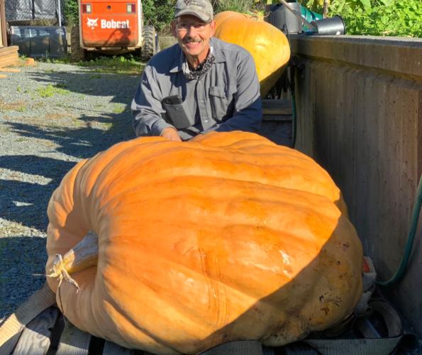 'Pumpkin therapy': How a Chilliwack, B.C. man's 430-pound pumpkin helps him heal
